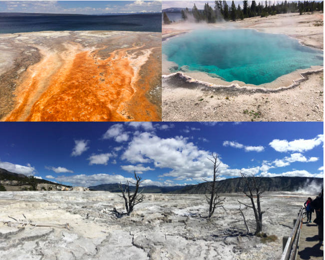 West Thumb Geyser Basin and Mammoth Hot Springs in Yellowstone
